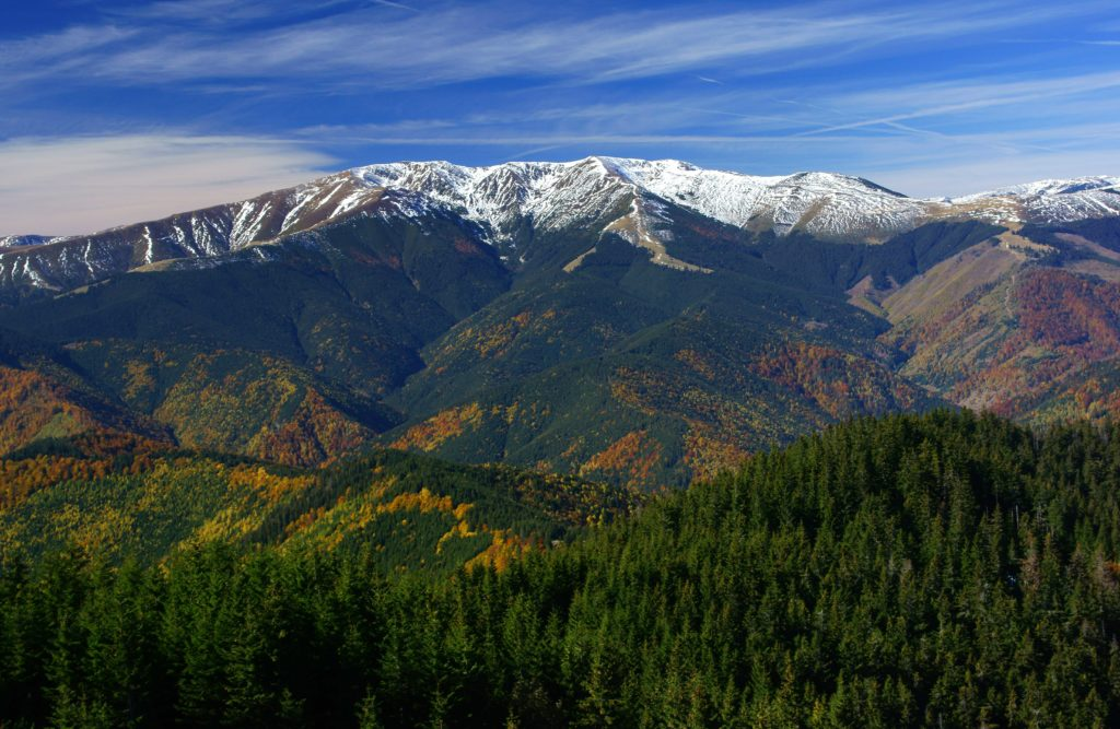 Natural forests in the Carpathian mountains