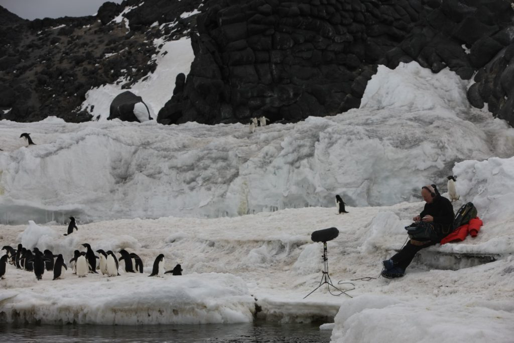 Adele penguins, Ross island, Antarctica