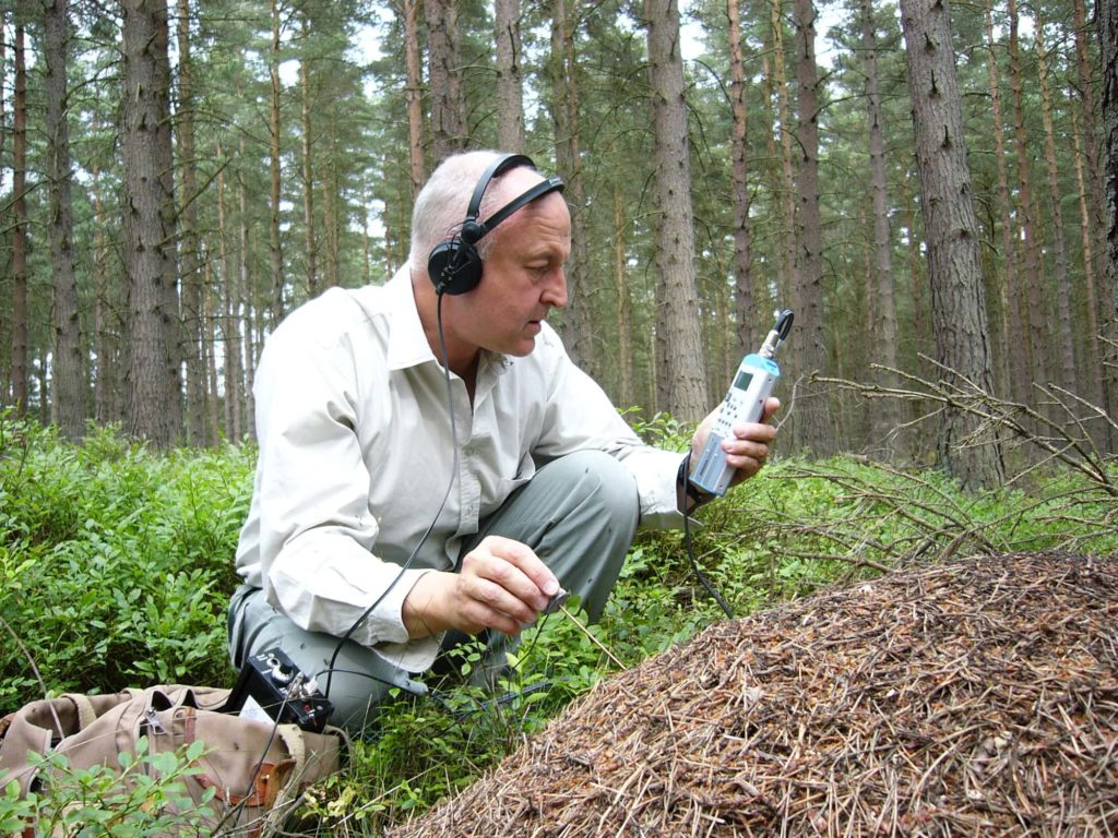 Recording wood ants, Northumberland