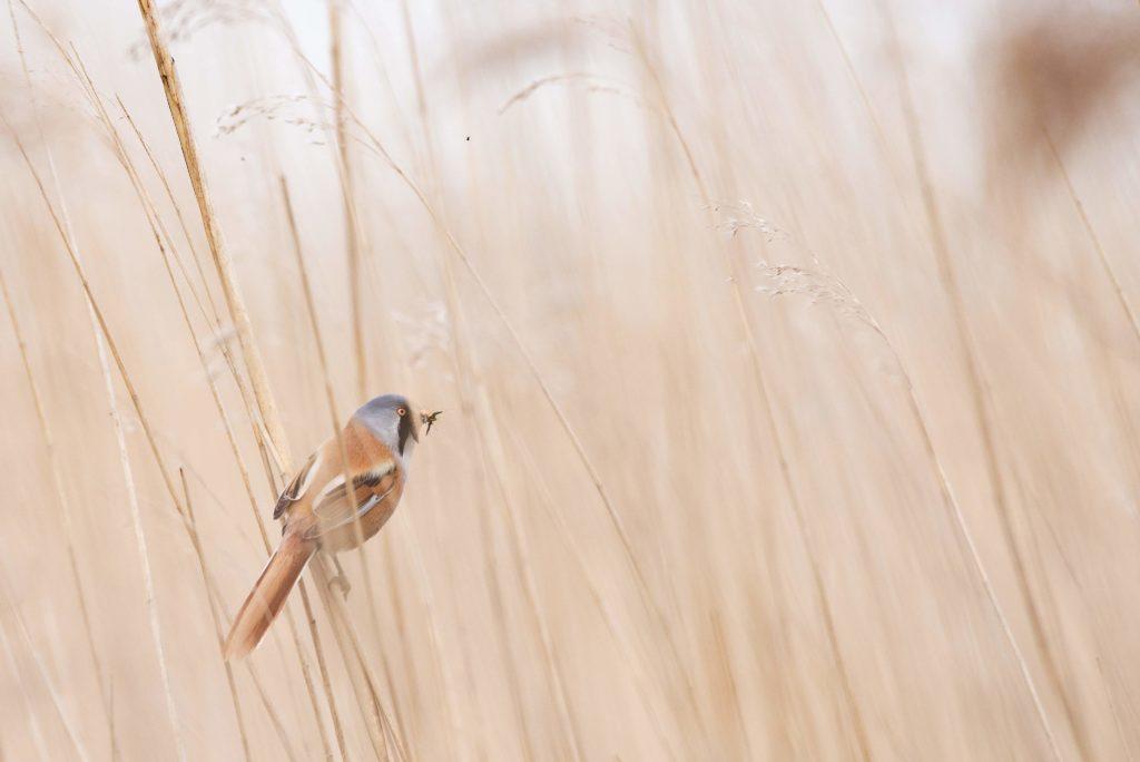 Ein Vogel im Feld