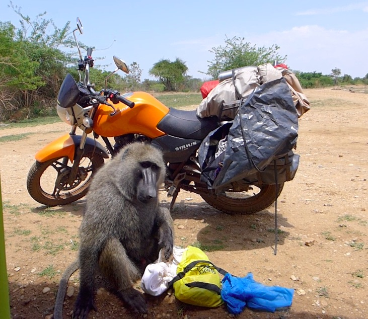 Monkey checking out Jack Wolfskin bag with wild ride motorbike in the back