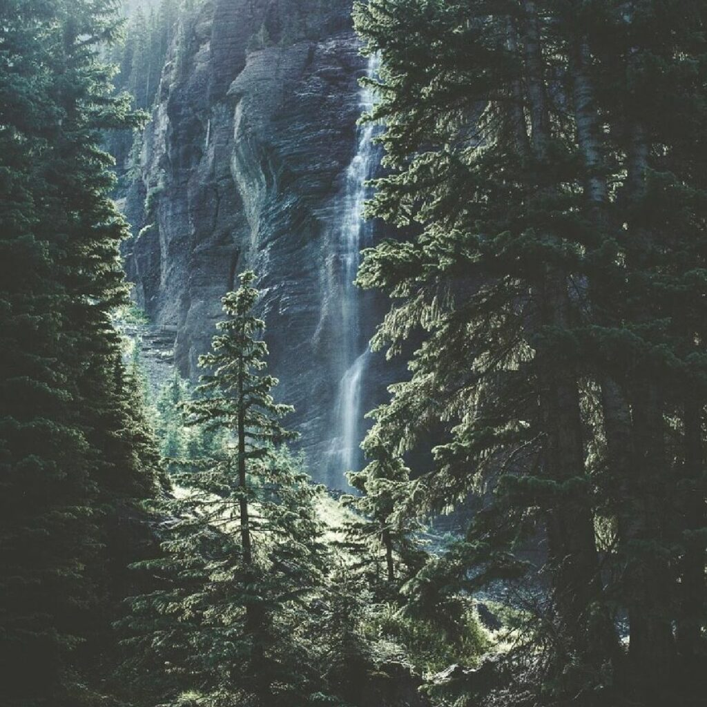 green thick forest with water fall is ideal to Walden