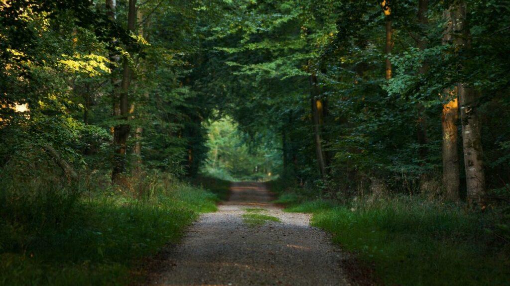 trancsending boundaries at the Gendarmstein trail