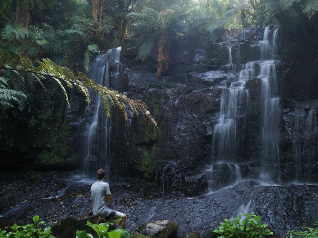 Shinrin-Yoku forest bathing from japan