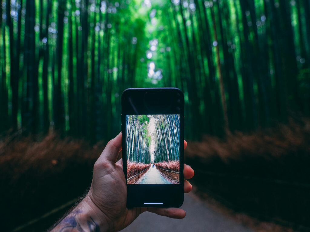 mobile device taking pitcure of a path that runs through a green forest