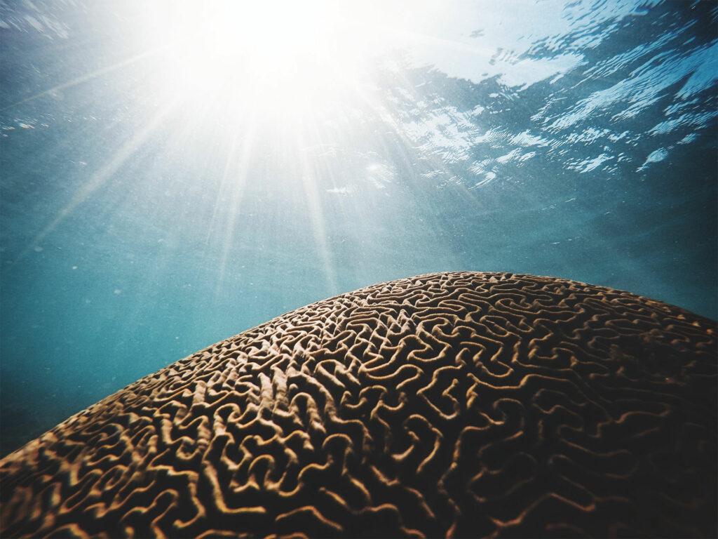 brain like a labyrinth in th ocean