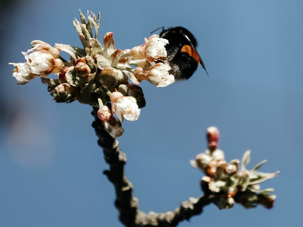 The loss of habitat is the foremost cause of declining wild bee numbers. As a result of urbanization, the cordoning off of terrain, and the growth of new streets and building sites, the natural habitat of wild bees has been severely reduced.