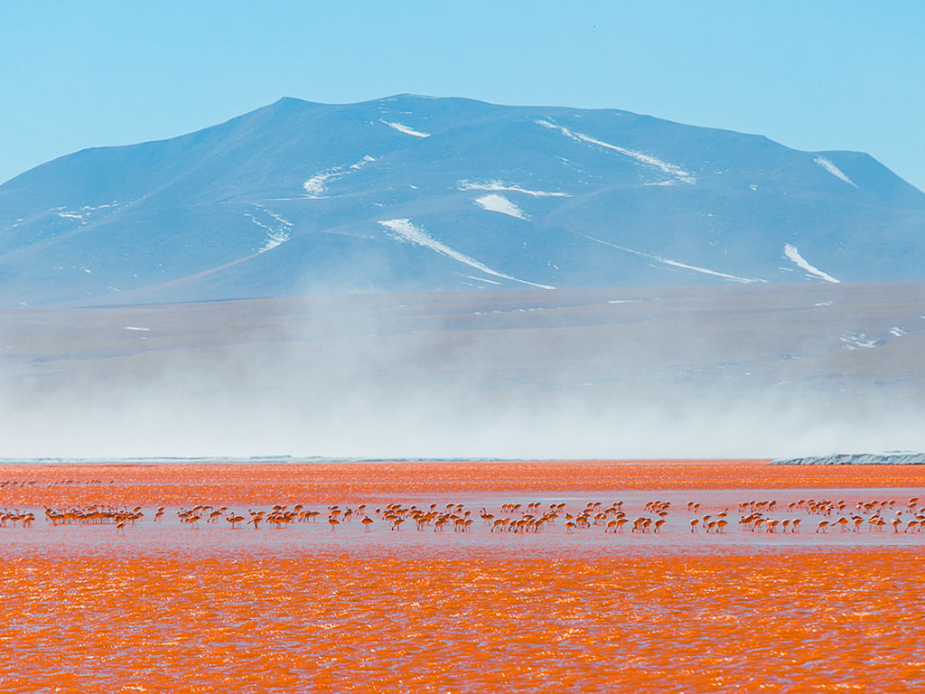 incredible herd of red / pink flamingos with view of the mountain