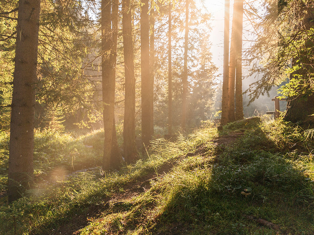 nature provides lasting memories for children, here we see a forest bathing in sun light